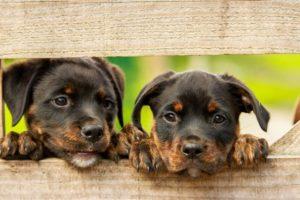 CBD für Tiere - Hilft Cannabidiol