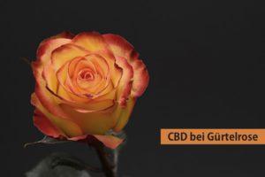 CBD bei Guertelrose (Herpes Zoster)